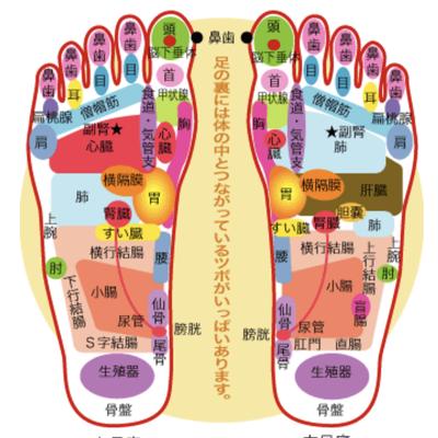 足裏の反射区の記事に添付されている画像