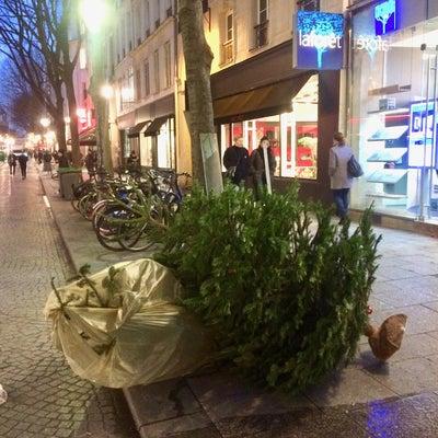 パリのクリスマス『クリスマスツリーのその後』の記事に添付されている画像