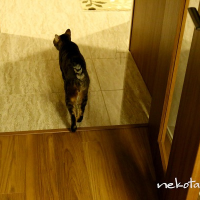 ハミガキ待ちで褒められる猫の記事に添付されている画像