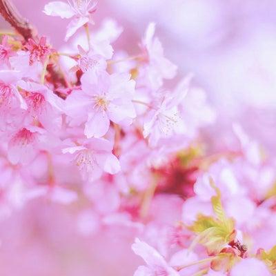 早割にて受付中♡春限定♡レイキヒーラー養成講座♡の記事に添付されている画像