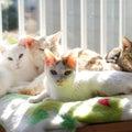 #暖かい家庭の画像