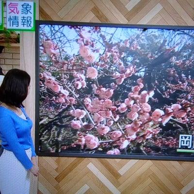 NHKニュース 女性アナの乳の記事に添付されている画像