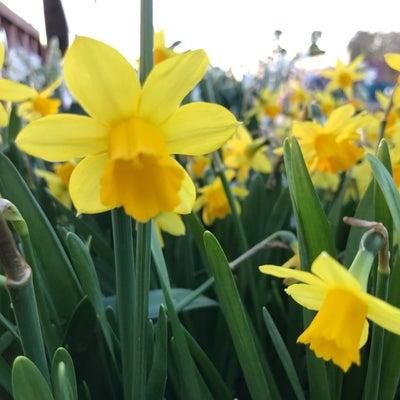 ひと雨ごとに『春』?! 徒然日記の記事に添付されている画像