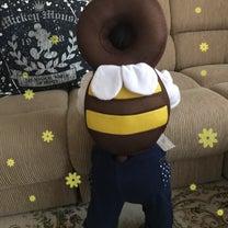 ハチさんの記事に添付されている画像