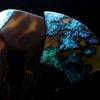 美しく色合いを変化しながら輝くべっ甲螺鈿蒔絵かんざし2019・3種 普段のキモノにお勧め贅沢な簪の画像