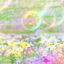 幸せな日々に感謝の記事に添付されている画像