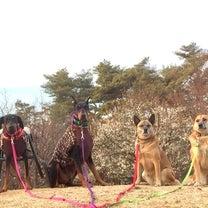 散歩日和の午後〜大好きな公園にて〜の記事に添付されている画像