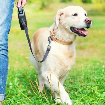 犬大好きの記事に添付されている画像