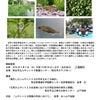 お知らせ 研究会「ムサシトミヨの保護と天然記念物の保存」の画像