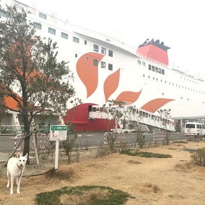 【特別編★】ず~っと一緒♪わんこと九州の船旅に行ってきた*の記事に添付されている画像