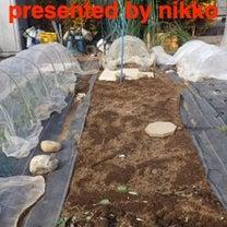 週一農園4の記事に添付されている画像