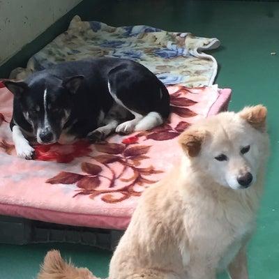 2/8 茨城センターの収容犬①の記事に添付されている画像