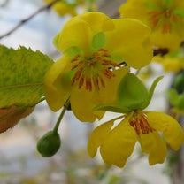 花たちの競演の記事に添付されている画像