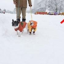 雪祭り1日目の記事に添付されている画像