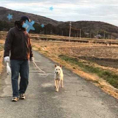 慣れない犬をだんだんと慣らすの記事に添付されている画像