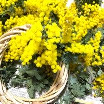 ミモザで花遊びの記事に添付されている画像