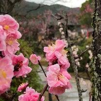 小野梅園の記事に添付されている画像