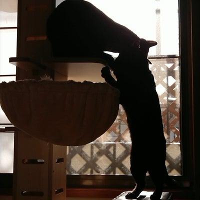 闘う!黒猫テト&ライの記事に添付されている画像