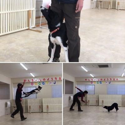 ドッグトレーニング Doggy-Jの記事に添付されている画像