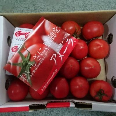 医食同源健康アメーラトマトソース!の記事に添付されている画像