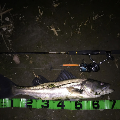 2019年2月10日 旧江戸川釣行の記事に添付されている画像