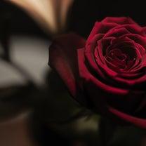 赤いバラを赤く撮りたいの記事に添付されている画像