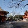 AMATERAS千葉ツアー報告~♪千葉神社 船橋大神宮 櫻木神社の画像