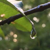 morning  dew  安曇野の記事に添付されている画像