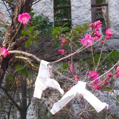 千束八幡神社の記事に添付されている画像
