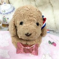ショコラちゃん♡ふんわりの記事に添付されている画像