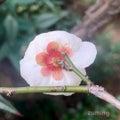 #植物観察の画像