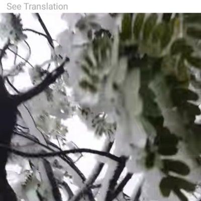 雪遊びとシェイブアイスの記事に添付されている画像