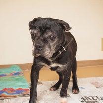 捨てられた犬の記事に添付されている画像