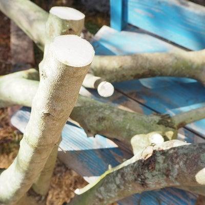 オリーブの剪定枝後日談と太木挿しチャレンジの記事に添付されている画像