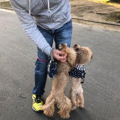 よもぎ&berryちゃんの散歩~の記事に添付されている画像