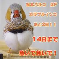 松本パルコ「カラフルインコ」もうすぐ終わるよ!の記事に添付されている画像