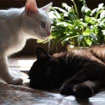 ペットが幸せに暮らせる為には・・・・の記事に添付されている画像