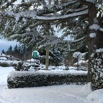 SNOW DAY でお休みだ〜!の記事に添付されている画像