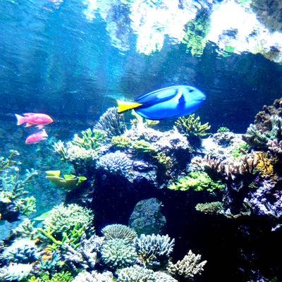 シンガポール旅行 その19 S.E.A. Aquariumの記事に添付されている画像