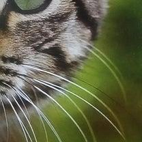 我は猫  苗字はもうないの記事に添付されている画像