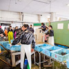 魚のまち明石漁港のW体験 セリ見学と「昼網」鮨 コースNO.113の画像
