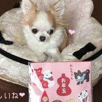 わんちゃんのお年玉とバレンタインのコラボの記事に添付されている画像