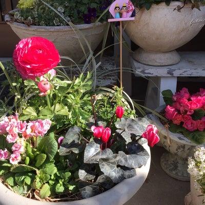 今日の花&庭の雑貨の記事に添付されている画像