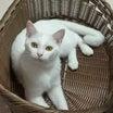 高知の白猫兄妹、大阪でトライアルスタート!