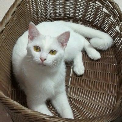 高知の白猫兄妹、大阪でトライアルスタート!の記事に添付されている画像
