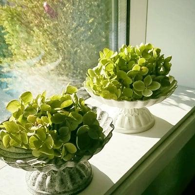 春の窓辺から~*の記事に添付されている画像
