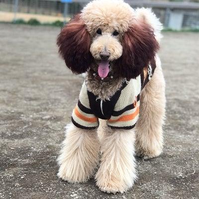 葉山国際村ドッグランの記事に添付されている画像
