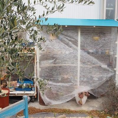 多肉植物を寒さから守る不織布の記事に添付されている画像