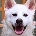 #保護犬カフェの画像