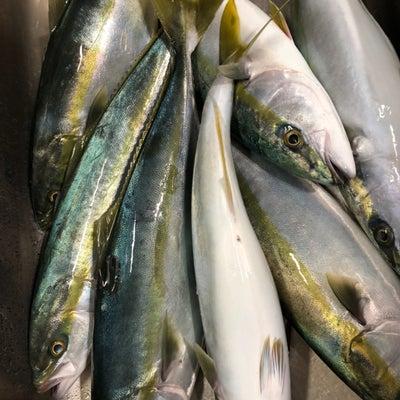 2019 初お刺身宴会!イナダでトビウオを釣る♪の記事に添付されている画像